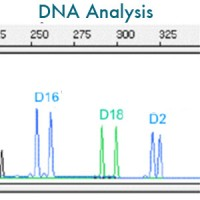Fontaine DNA analysis