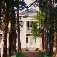 Rowan Oak canvass