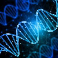 Evidence analysis – DNA