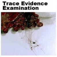 The Crime Lab analyzed trace evidence from the scene