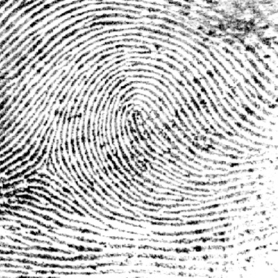Fingerprint analysis summary